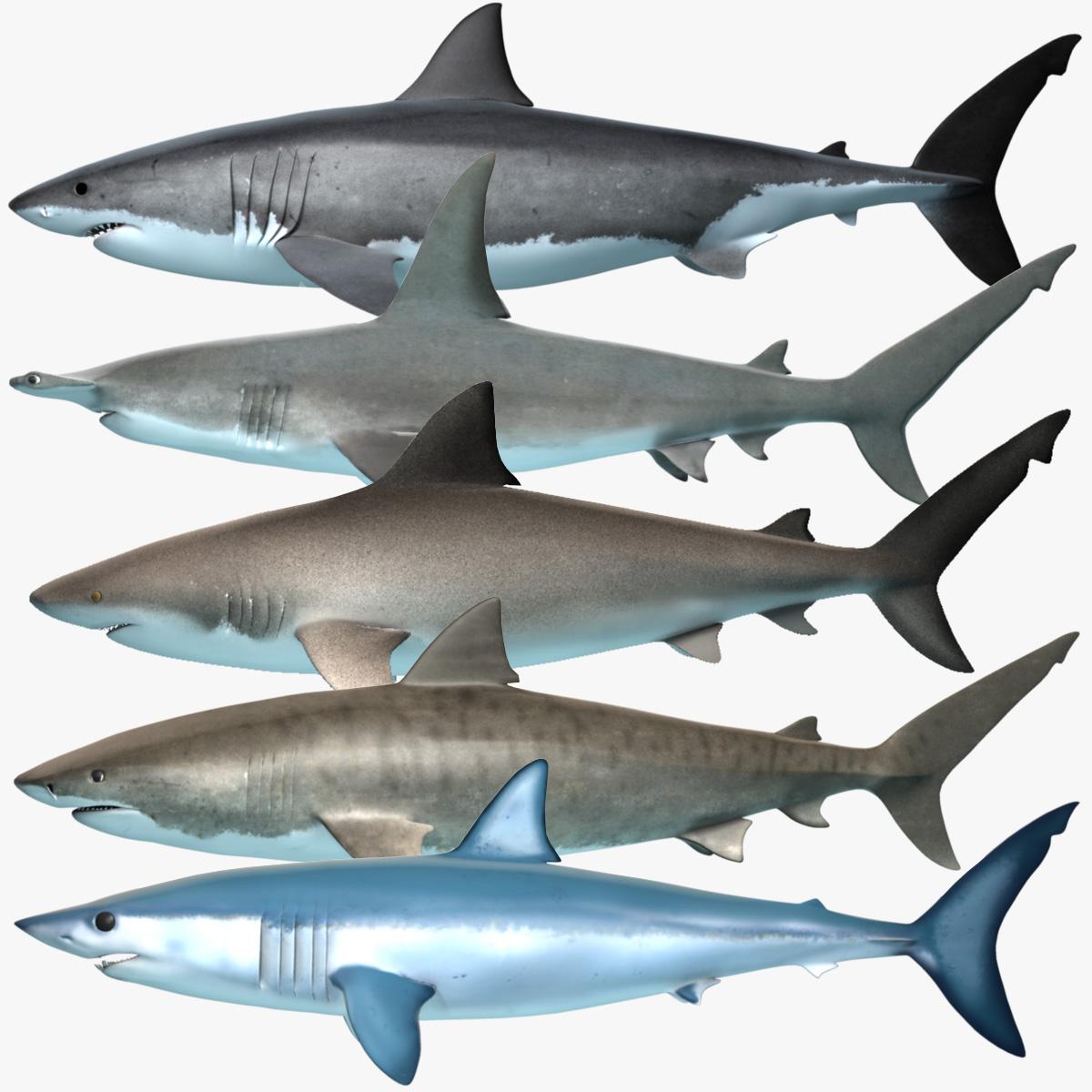 Great white shark vs bull shark