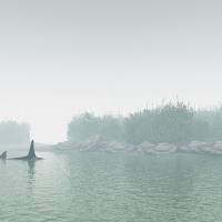 orca_rb