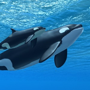 orca_mc